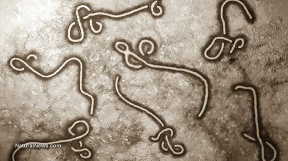 ebola-strain-pandemic-virus
