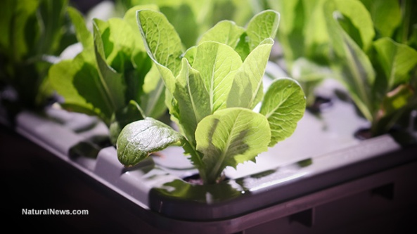 food-rising-mini-farm-grow-box