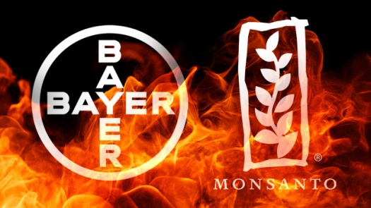 bayer-monsanto-fire