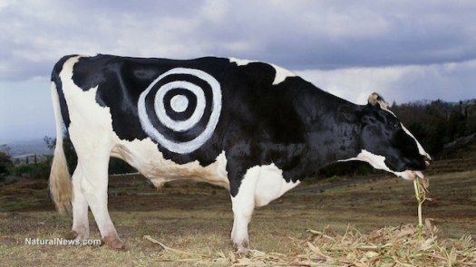 cow-dairy-target