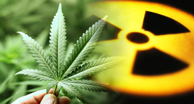 cannabisradiation