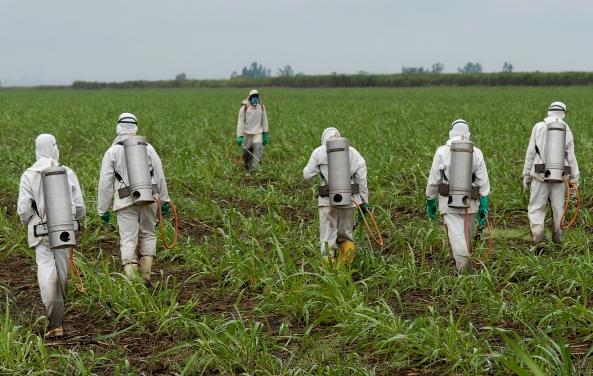 spraying-herbicide-000019257784_large_87993