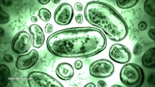 bacteria-germs-cells-e1485778558350