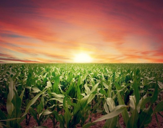 sunset-farm-crops-field-e1471505264490