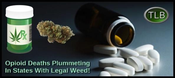 opioid-drugs-legal-pot