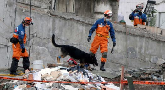 reuters-mexico-search-and-rescue-dog