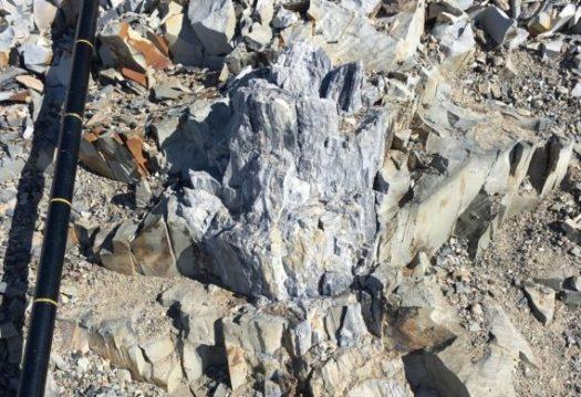 antarctica-tree-stumps-570x390