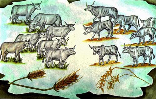 seven-cows
