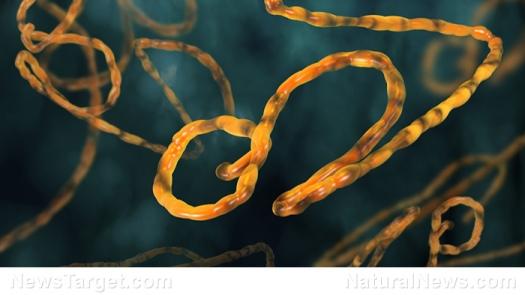 strain-ebola-virus-pandemic