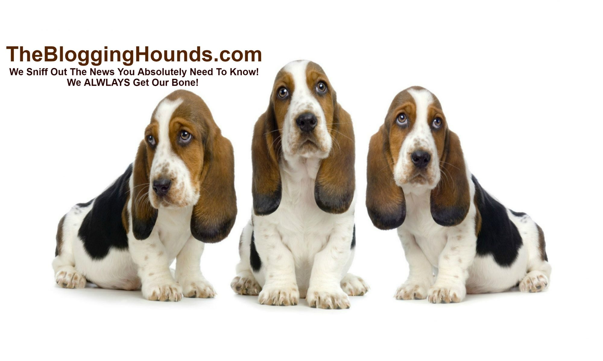The Blogging Hounds