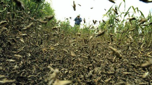 locust-swarm-2019-1024x574