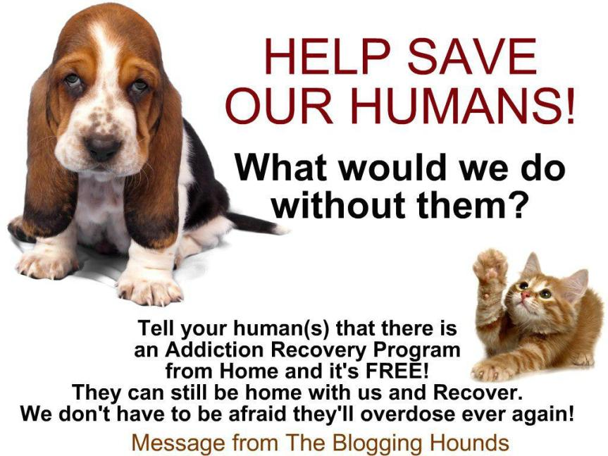 The blogging hounds recovery ad