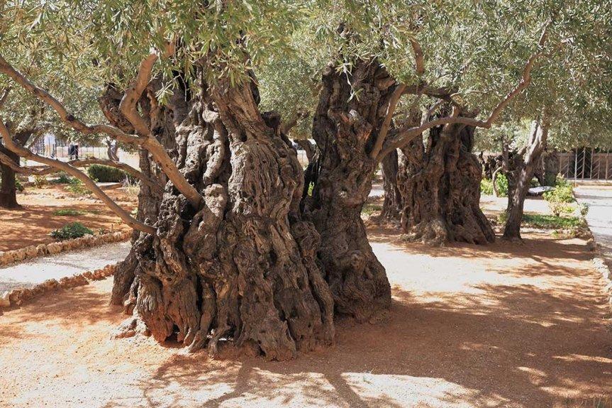 Pressed in Gethsemane