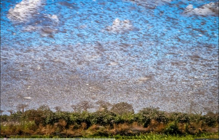 Just like something out of the Bible! Nightmarish swarm of millions of locusts darken the sky over Najran, Saudi Arabia, just weeks after devastating Iran