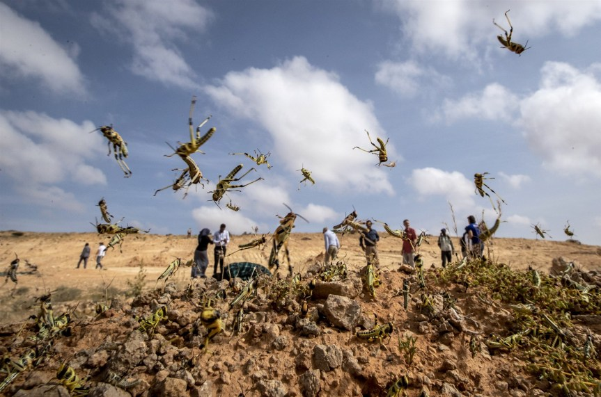 'Most devastating plague of locusts' in recent history could come within weeks, U.N. warns