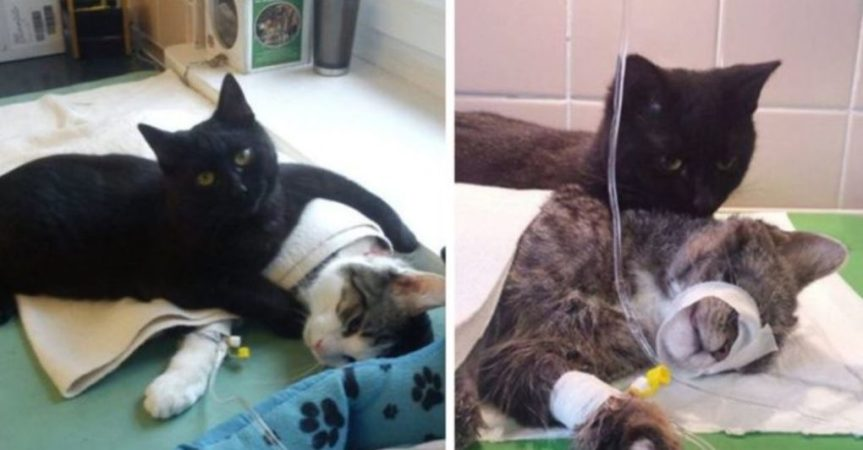 Meet The Nurse Cat From Poland Who Looks After Sick & Injured Animals In AShelter