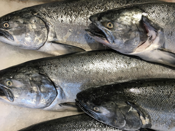 81 dangerous substances found in salmon caught in Seattle