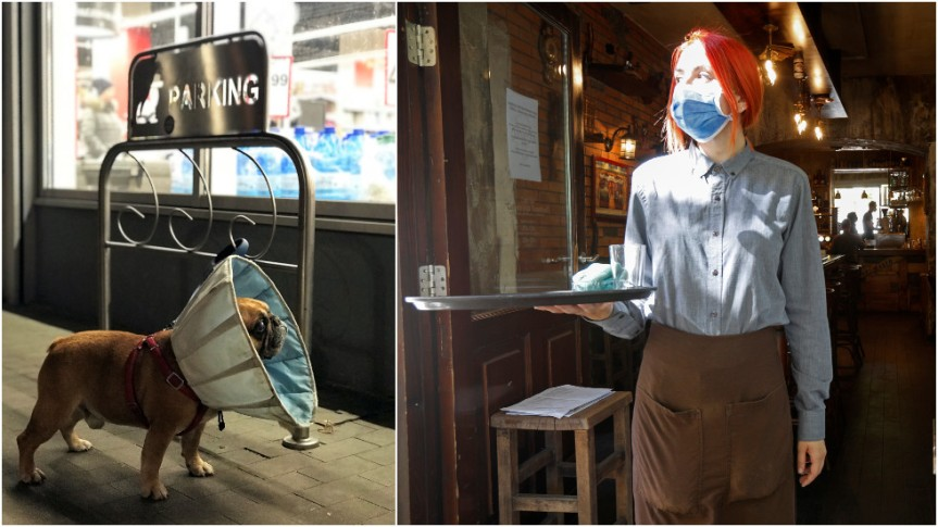 Cones of shame? Maine orders restaurant servers to don face shields like dog collars in bizarre Covid-19guidelines