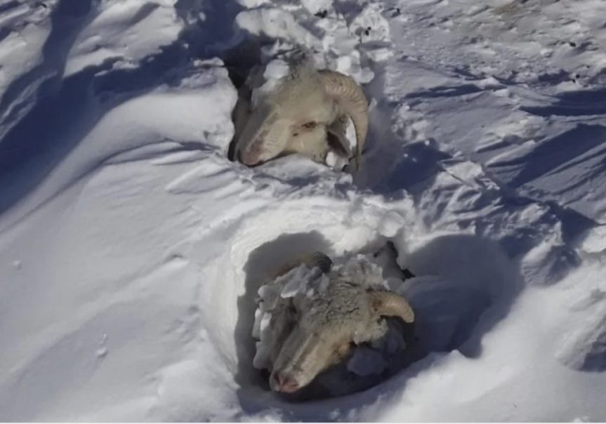 There's so Much Snow in Patagonia Right Now That Cattle, Horses and Sheep Are Buried Alive inArgentina