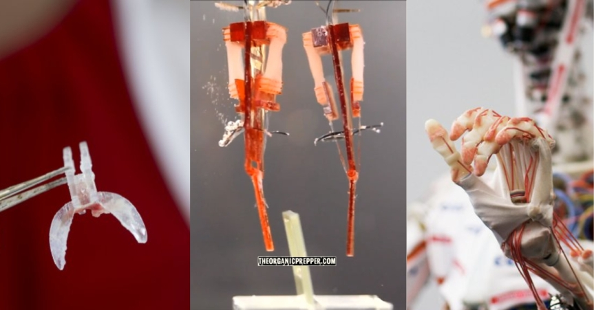 Scientists Have Created Programmable Robots Made of LIVING TISSUE. What Could Possibly GoWrong?